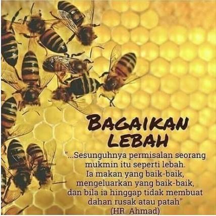 Bagaikan Lebah